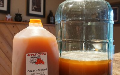 How to Make Peach Hard Cider