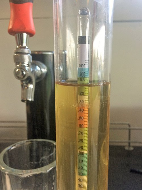 hydrometer reading of a hopped cider